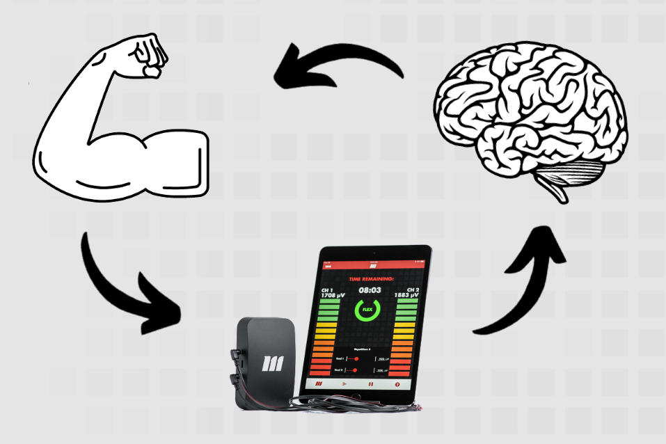 Cycle of visual feedback on motor activity